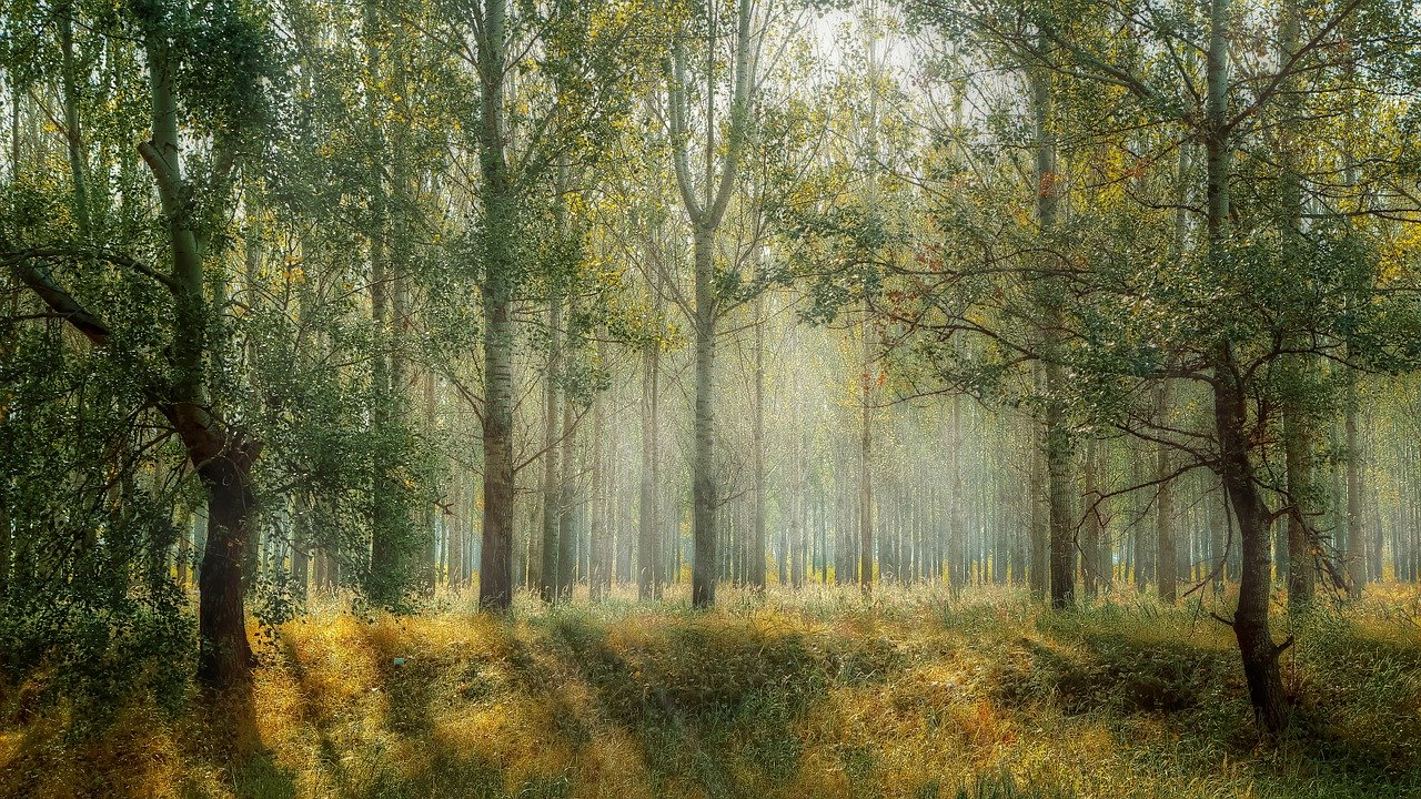 План восстановления леса в Нижегородской области перевыполнили на 2%